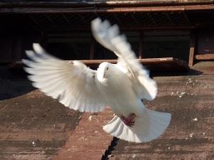 wolny ptak